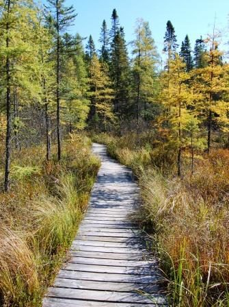 Nature Walks Stadtpark